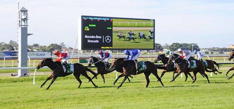 SEDANZER IMPRESSES AGAIN, OFF to GROUP 1