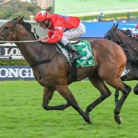 Blueblood Thoroughbreds with two live chances in Group One's