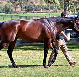 Stakes Double for Smart Missile