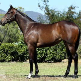 Invincible Filly Salutes for Bluebloods