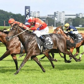 BLUEBLOOD'S THREE-YEAR-OLD FILLY SEABROOK CHASING HISTORY