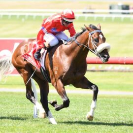 2YO COLT – LOOKS LIKE BLUEBLOOD HAS FOUND ANOTHER ONE