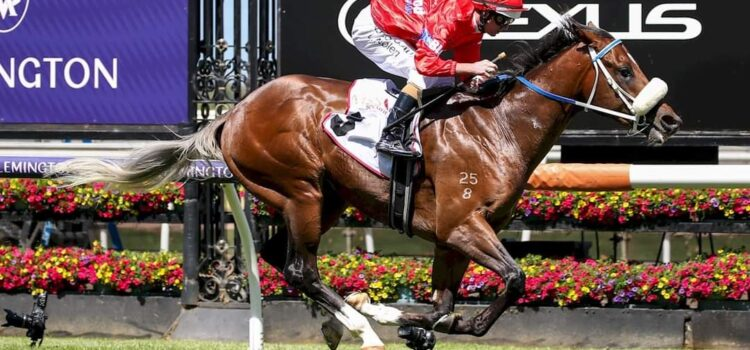 PATH STEPPING TO GUINEAS FOR LIGHTSABER