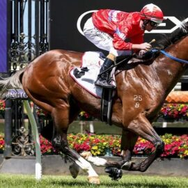LIGHTSABER TO KICK OFF SPRING CAMPAIGN IN SATURDAY'S GRP 3 VAIN STAKES